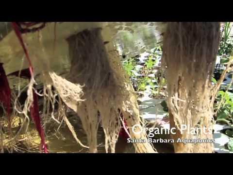 Tour of Santa Barbara Aquaponics