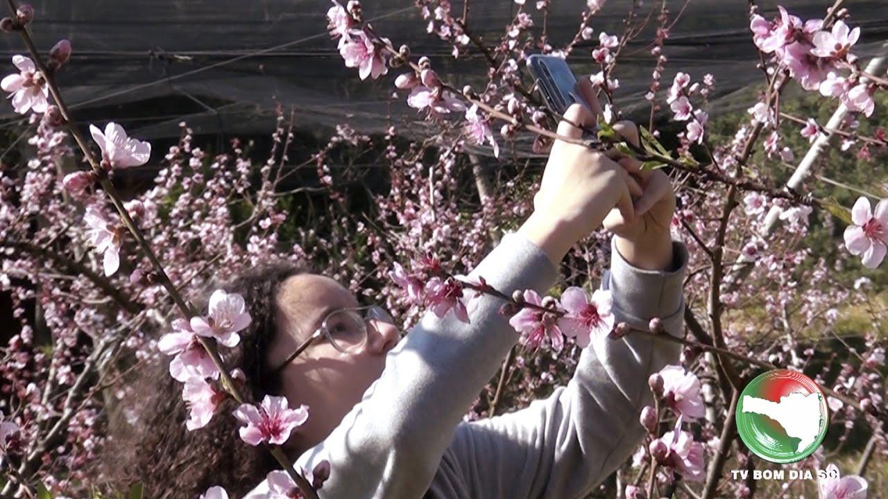 Florada das frutas, um show da natureza