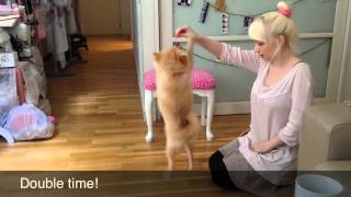 Lottie The Pomeranian Practices Her Tricks! December 2012 - Violet Lebeaux Vlogs