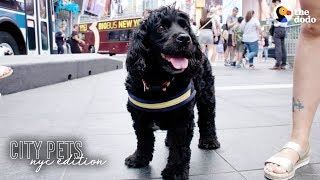 Rescue Dog Loves Being A Spongebob Broadway Star   The Dodo City Pets