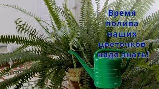 видео Вода для поливки растений