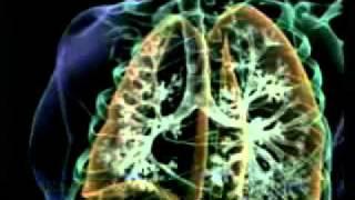 Mrekullia tek frymemarrja - Harun Yahya Video