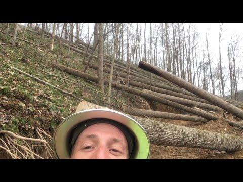 Crushin The Poplar In West Virginia!