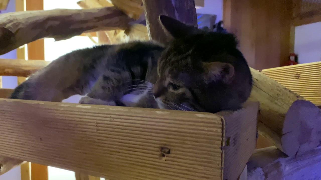 Journey trough the cat hotel Tinka - Part 1