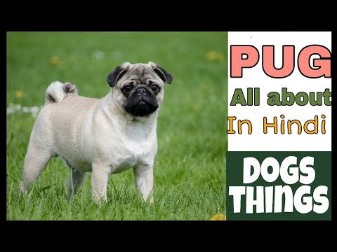 Know all about PUG DOG