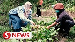 New urban farming legislation in the pipeline, says minister