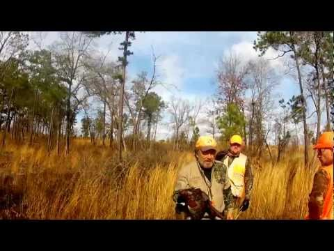 Upland Bird Hunt At Anderson Creek Hunting Preserve