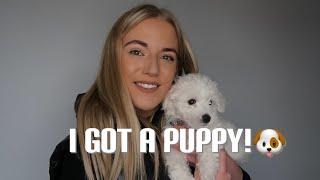 I GOT A PUPPY! Picking up my 8 week old Bichon Frise | Lucy Ecclestone