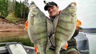 РЕАЛЬНЫЕ БЫКИ Огромные ОКУНИ КАК ЩУКИ Такая рыбалка бывает РАЗ в ЖИЗНИ