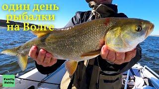 Один день рыбалки на Волге Ловля сома на квок язя на тейл спиннер щуки на троллинг 2021