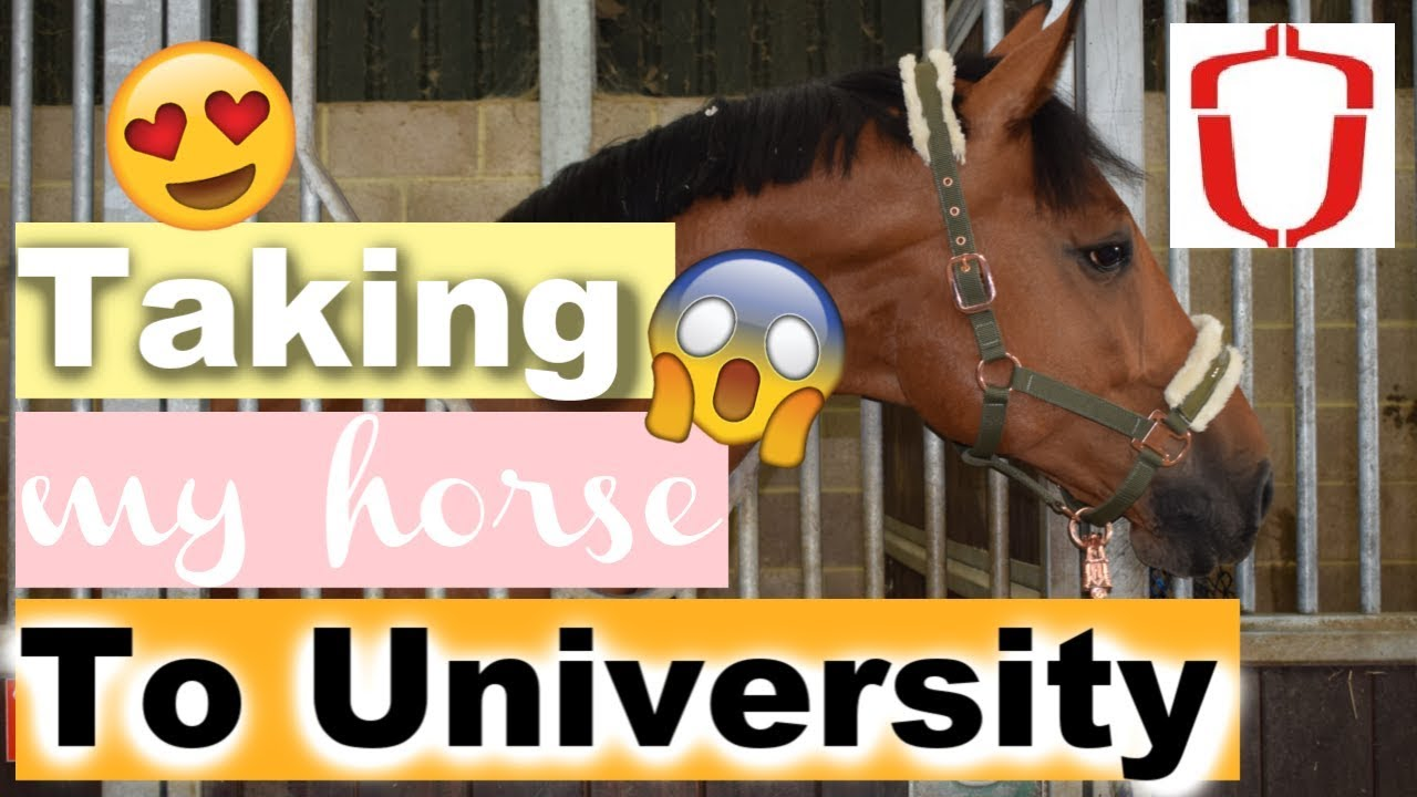 Taking my Horse to Hartpury Equine University!! | UNI VLOG 2 | Ride Every Stride