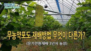 무농약 포도재배방법 이것이 차이점? 노하우공개 (유기전…