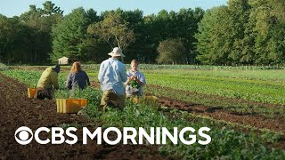 Environmentally-minded young workers trade office jobs for work on the farm