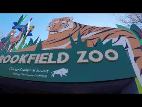Ted and Tiff: Brookfield Zoo, Chicago 2017