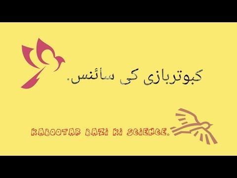 Download Kabootar Bazi Ki Science MP3, MKV, MP4 - Youtube to MP3