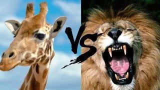 10 Шокирующих Битв Животных Снятых На Камеру