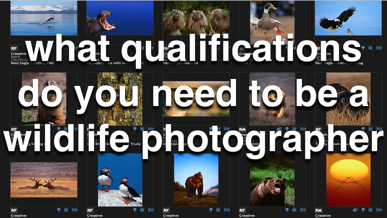what qualifications do you have