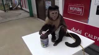 Funny Monkey Videos Compilation 🐒 MONKEYS SO SMART