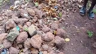 عبادة الأحجار في افريقيا — الحمد لله الذي هداهم للإسلام