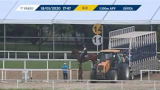 Vidéo de la course PMU PREMIO GRAJAU (INTERNET)