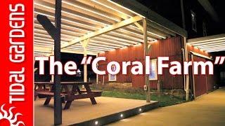 """The """"Coral Farm"""" Farm"""