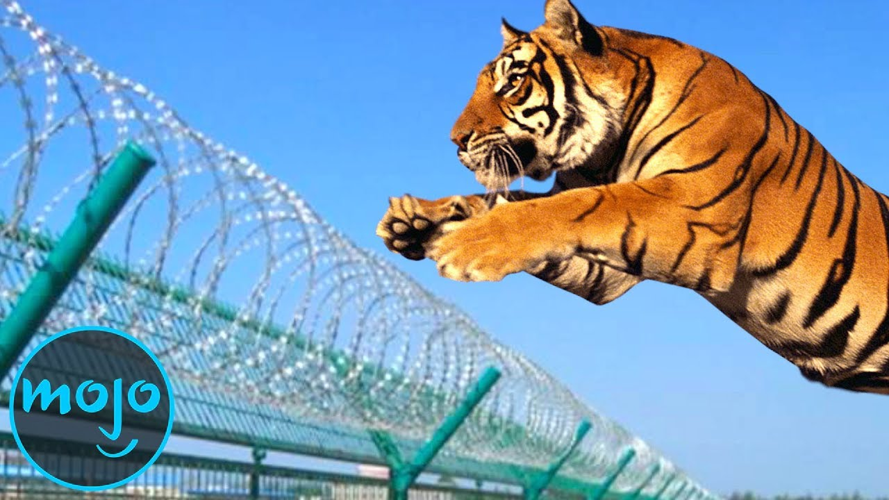Top 10 Greatest Zoo Animal Escapes