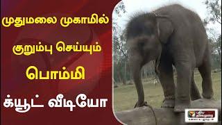 முதுமலை முகாமில் குறும்பு செய்யும் 'பொம்மி'- க்யூட் வீடியோ | Elephant