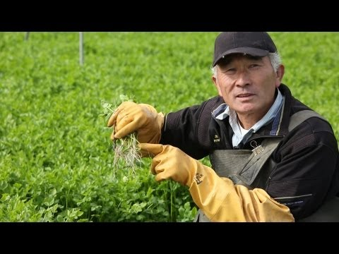 Natori, Japan's specialty herb: Sendai seri