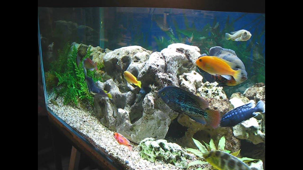 aquarium tank 850 litre 230 gallon cichlides am ricain. Black Bedroom Furniture Sets. Home Design Ideas