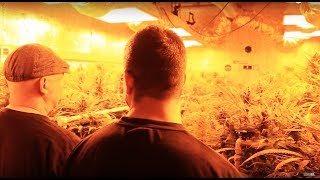 A Sea of Green (Marijuana Crime Drama/Full Movie)