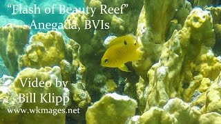 Anegada BVIs Underwater Video ---  by Bill Klipp