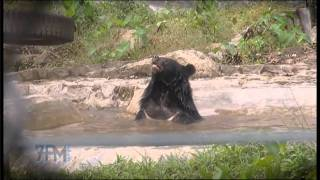 Free the Bears story on The 7pm Project - Mary Hutton & Matt Hunt (2011) - Vietnam