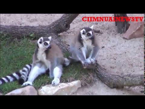 CNNZomi Zoo and Aquarium, Omaha's Nebraska ..