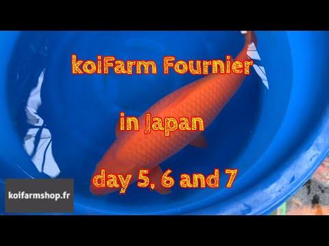 koiFarm Fournier in