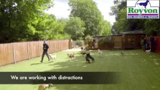 Royvon Complete Dog Training Solution. See How Much We Can Teach Your Dog In 3 Weeks!