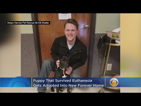 Pet Central - Watch! 'Miracle puppy' has new home after surviving euthanasia drugs