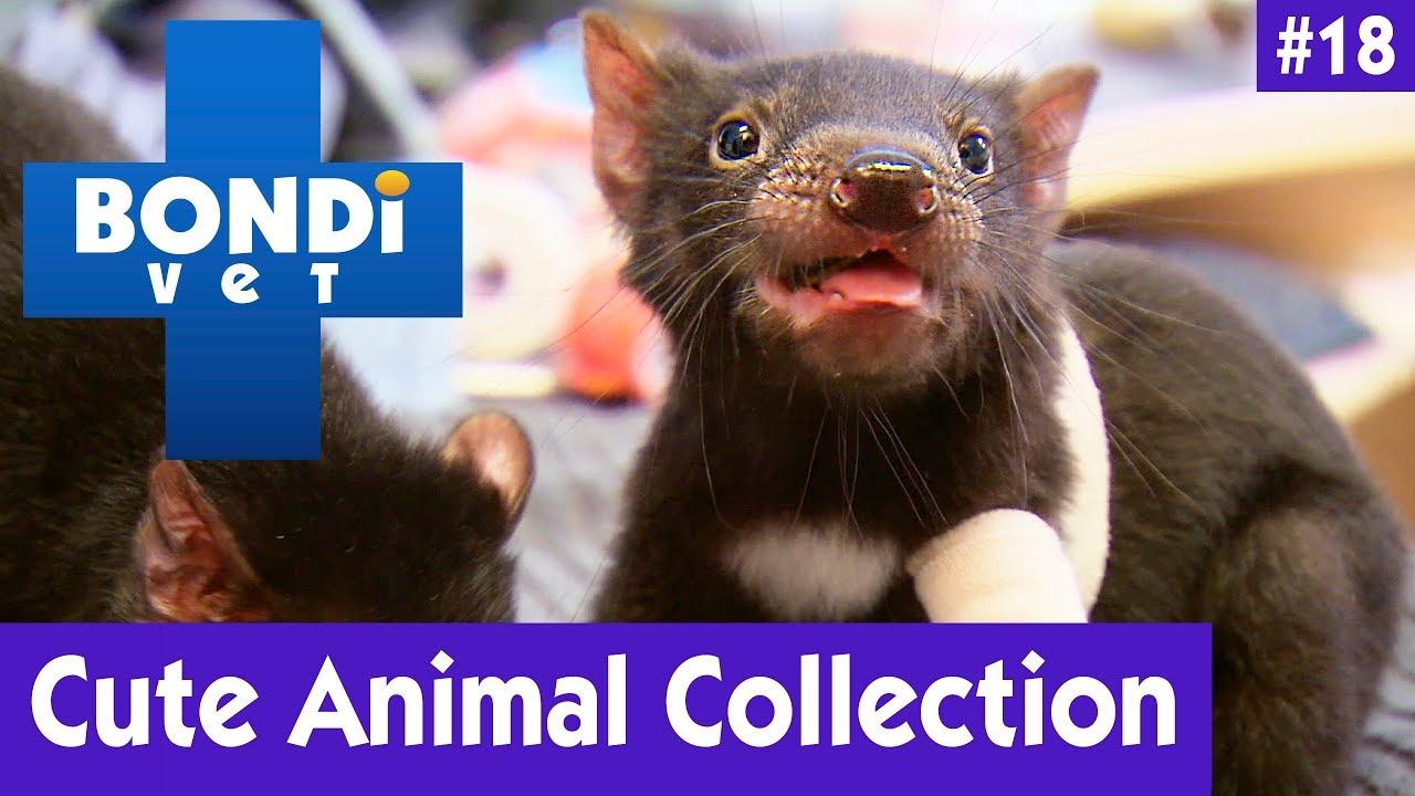 ???? CUTE ANIMAL COLLECTION #18   BONDI VET ????