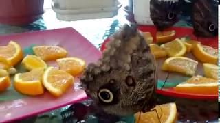 Смотреть видео Выставка бабочек в Москве онлайн