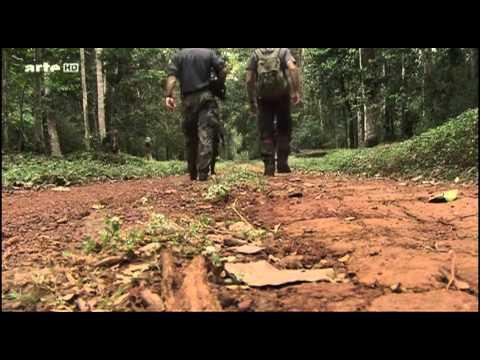 Vidéo Et le singe inventa la culture