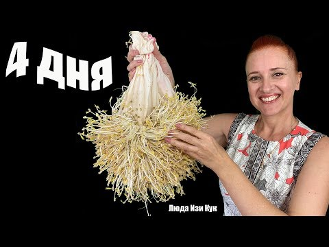 How to Grow Bean Sprouts at home How To Sprout Beans #LudaEasyCook home and garden