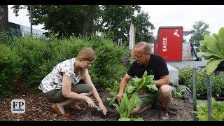 Wie die Landesgartenschau Frankenberg bepflanzt wird