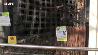 Черные соболи - Московскому зоопарку