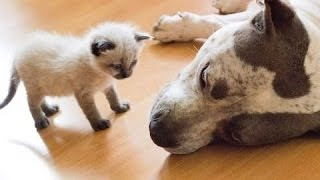 Добрые собаки и Маленькие Котята! Первая Встреча!