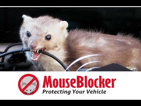 Mouse Blocker : Stop Rodents From Eating Your Wires!