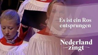 Nederland Zingt: Es ist ein Ros entsprungen