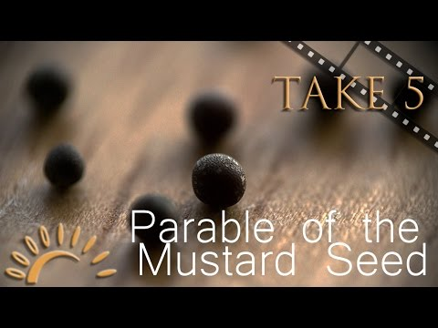 parable of the mustard seed essay The parable of the good samaritan appears in luke 10:25-37 the parable involves a lawyer asking jesus how to inherit eternal life when jesus catches the lawyer in his own game by asking him his knowledge of the law, the lawyer again tries to corner him by asking for a definition of neighbor.