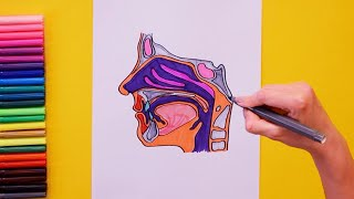 How to draw and color Human Nose and Throat Structure