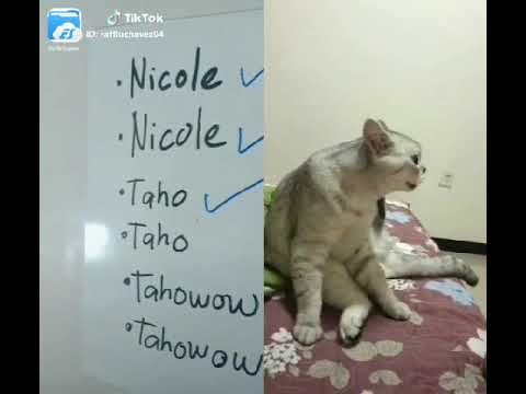 Funny Cats Talking like  Humans