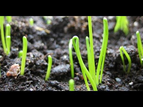 урожайный огород татьяна ютуб