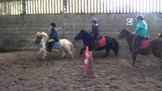 Astérix poney shetland à vendre